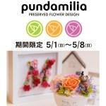 神戸マルイにプリザーブドフラワー専門店「プンダミリア」期間限定OPEN!