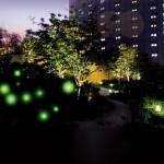 都会で見れる『ホタル夕べ』が今年も開催!