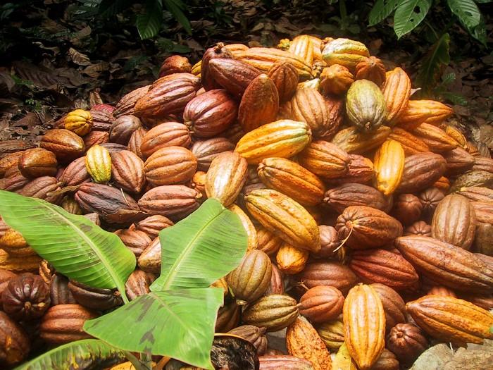 Boli cacao 3mb