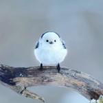 小鳥ガーデン