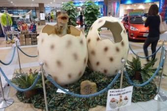 卵のフォトスペース2