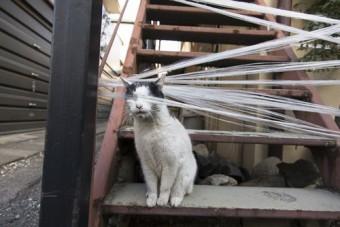 沖昌之「必死すぎるネコ2」