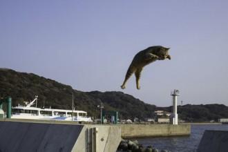 五十嵐健太「飛び猫」