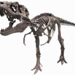 ナイト恐竜VSティラノ