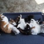 写真展<br>「劇場版 岩合光昭の世界ネコ歩き<br>あるがままに、水と大地のネコ家族」